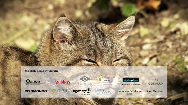 blog Wildkatzen Sponsoren - B.U.N.D. Wildkatzen